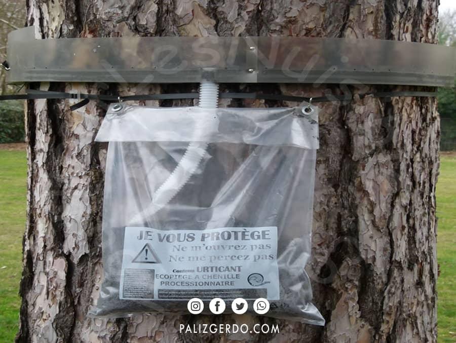 مبارزه و درمان با کرم درختان گردو