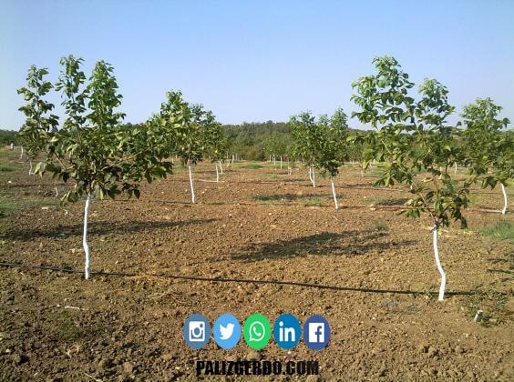 خاک مورد نیاز نهال گردو