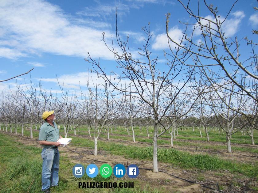 درختان گردو برای رشد و محصول دهی