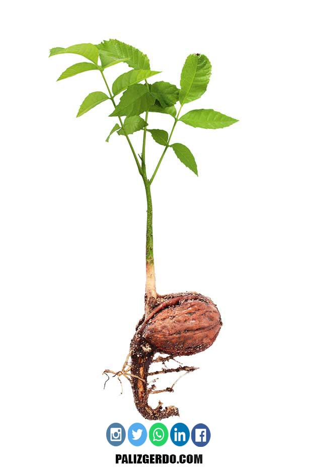نحوه کاشت پرورش