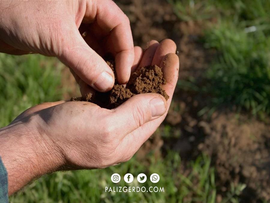 کاشت نهال های گردو در خاکی مناسب و مرغوب