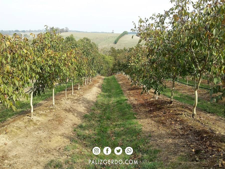 تعیین اقلیم در احداث باغ گردو